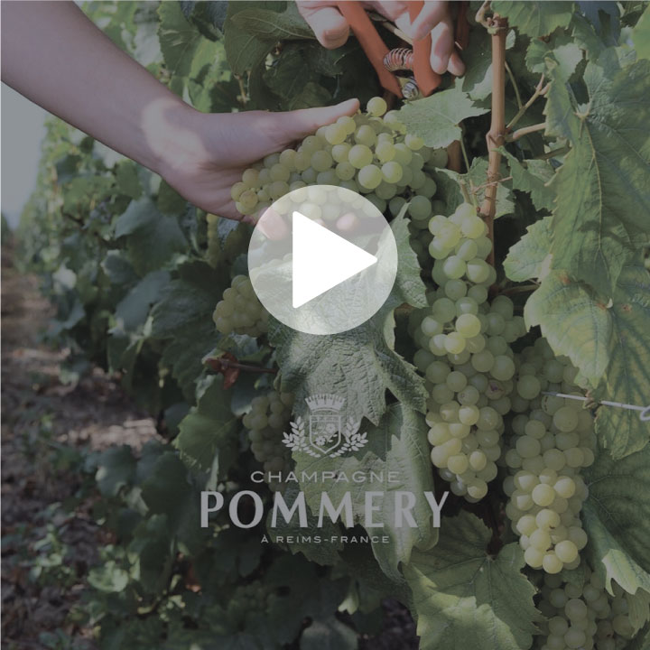 Pommery Cellars