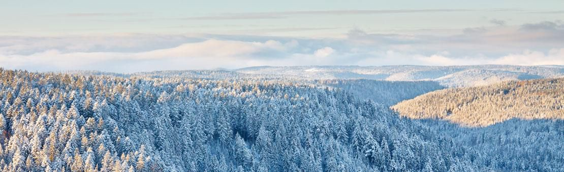 Blackforest Winter